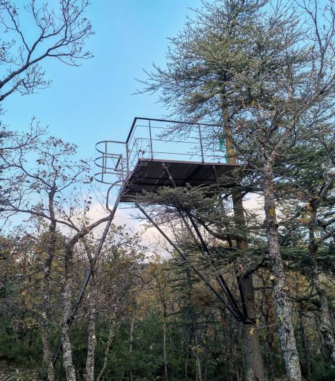 Plateau suspendu dans un arbre