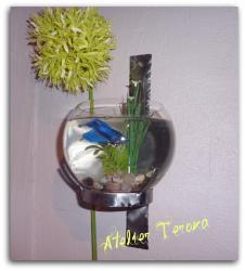 aquarium-001.jpg